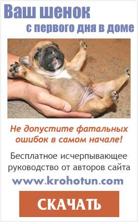 Ваш щенок: скачать бесплатное руководство