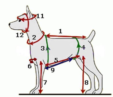 Как снимать мерки для собаки