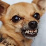 Почему собака кусается и что с этим делать?