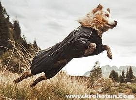 Как сшить комбинезон для собаки любой породы по выкройке Крохотуна