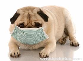 Простуда у вашей собаки: лечение и профилактика