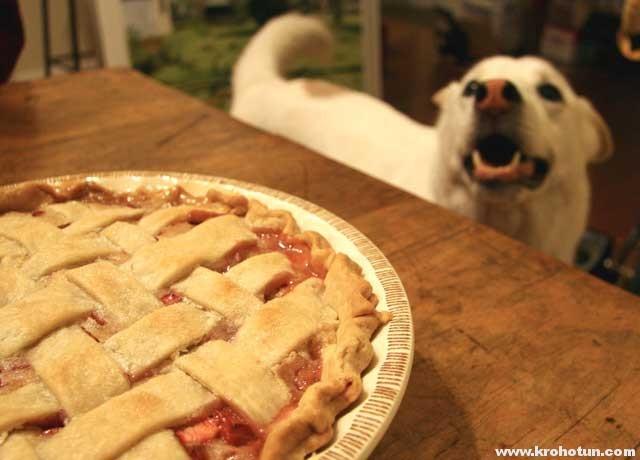 Как выбрать лакомства для собак: наш обзор рынка