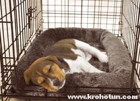 Клетка для собаки: инструкция по выбору и советы по приучению