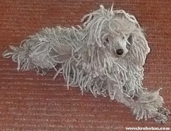 corded-poodle