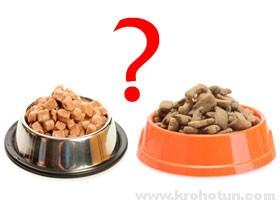Консервы или сухой корм? Сравнение и анализ