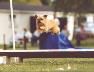 griffon-agility