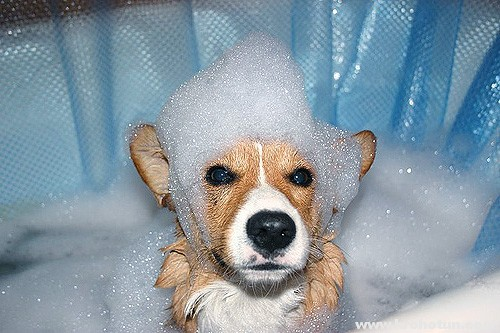 фото чистой собачки