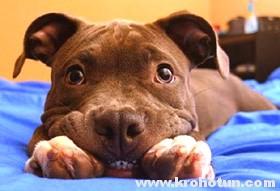 Папилломатоз у собак: причины и лечение
