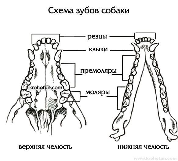 shema-zubov
