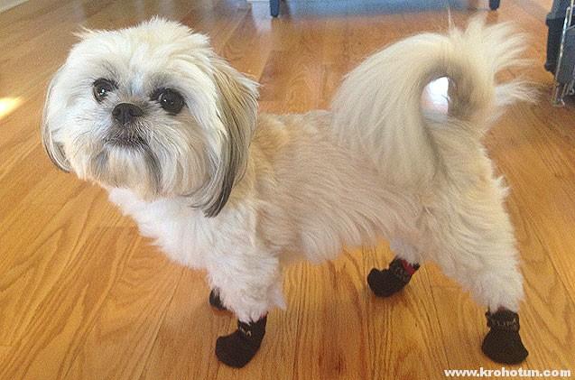 4cd34e1d51df Обувь для собак мелких пород  зачем это нужно