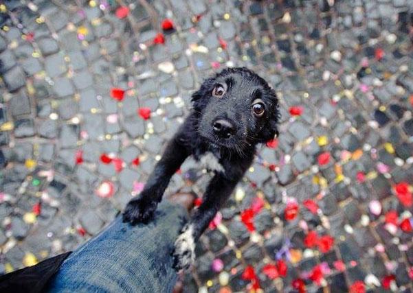 щенок ищет помощи у хозяина